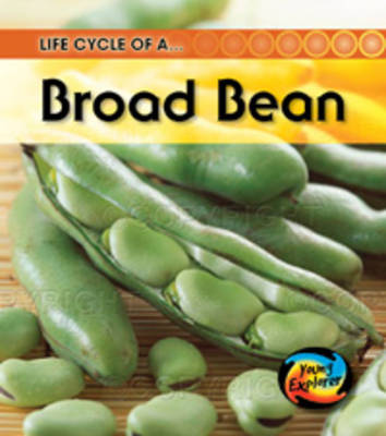 Life Cycle of a Broad Bean by Angela Royston