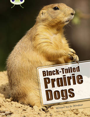 BC NF White B/2A Black-Tailed Prairie Dogs NF White B/2a by Jo Windsor