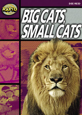 Rapid Stage 1 Set A Reader Pack: Big Cats Small Cats (series 1) by Dee Reid
