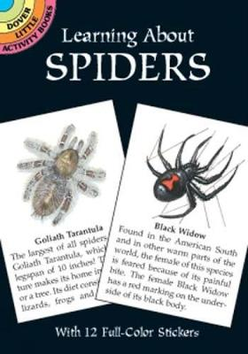 Learning About Spiders by Jan Sovak