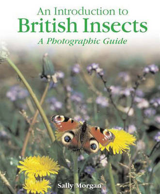 British Insects A Photographic Guide by Sally Morgan