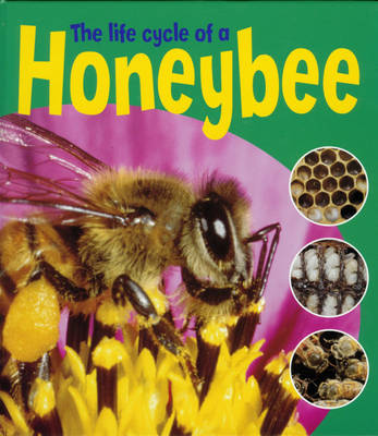 The Life Cycle of a Honeybee by Ruth Thomson