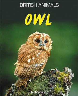 Owl by Stephen Savage
