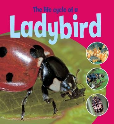 The Life Cycle of a Ladybird by Ruth Thomson