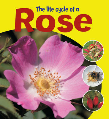 The Life Cycle of a Rose by Ruth Thomson