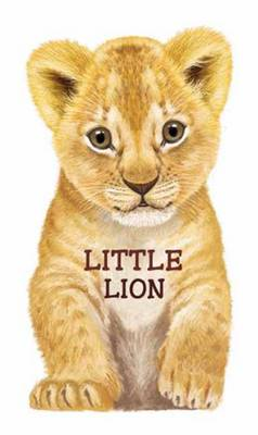 Little Lion Look at Me Books by L. Rigo