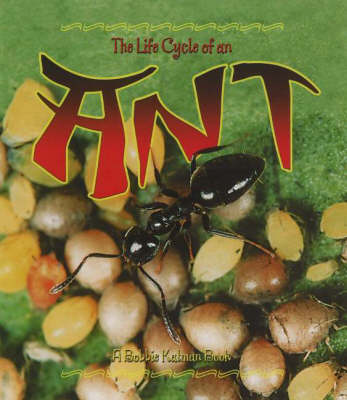 The Life Cycle of an Ant by Hadley Dyer, Bobbie Kalman