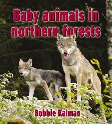 Baby Animals in Northern Forests by Bobbie Kalman