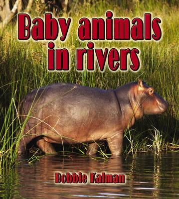 Baby Animals in Rivers by Bobbie Kalman