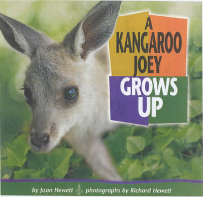 A Kangaroo Joey Grows Up by Joan Hewett, Richard Hewett