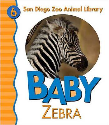 Baby Zebra by Patricia A. Pingry