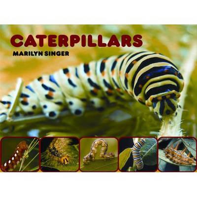 Caterpillars by Marilyn Singer
