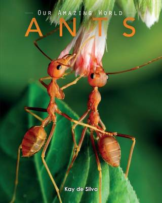 Ants Amazing Pictures & Fun Facts on Animals in Nature by Kay De Silva