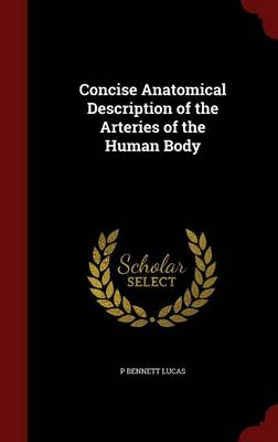 Concise Anatomical Description of the Arteries of the Human Body by P Bennett Lucas