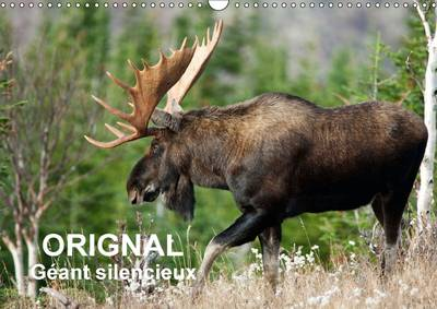 Orignal. Geant Silencieux L'Orignal Du Canada Au Fil Des Quatre Saisons. by Philippe Henry