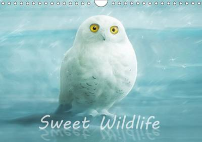 Sweet Wildlife / UK-Version / Birthday Calendar 2017 The Funny and Sweet Animal Calendar for Old and Young by Silvio Schoisswohl