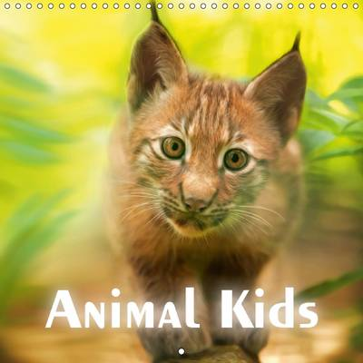 Animal Kids 2017 The Funny and Sweet Animal Calendar for Old and Young by PhotoPlace