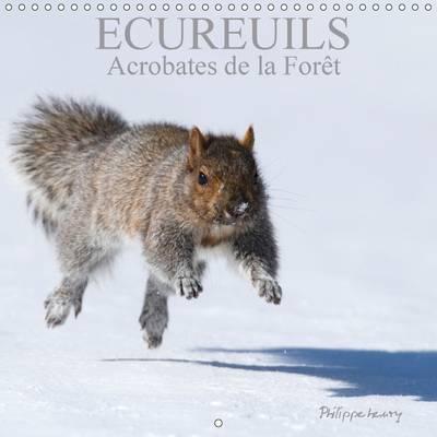 Ecureuils. Acrobates de la Foret 2017 Les Ecureuils du Quebec au Fil des Quatre Saisons by Philippe Henry