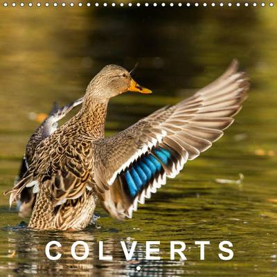 Colverts 2017 13 Portraits Colores De Canards Colverts. by Philippe Henry