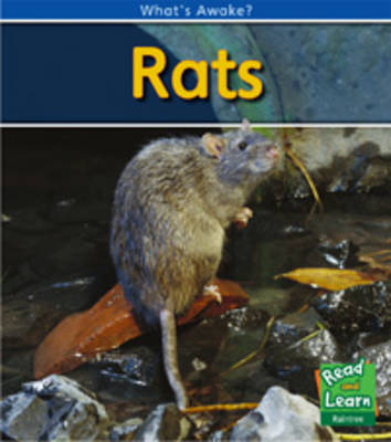 Rats by Patricia Whitehouse