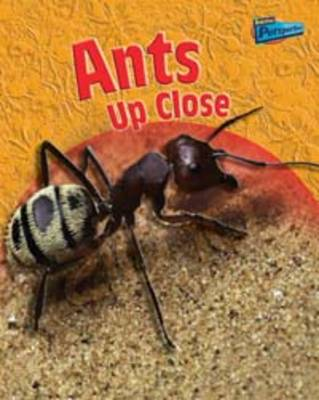 Minibeasts Up Close Pack A of 5 by Robin Birch