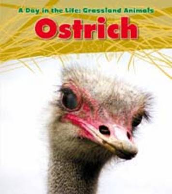 Ostrich by Louise Spilsbury