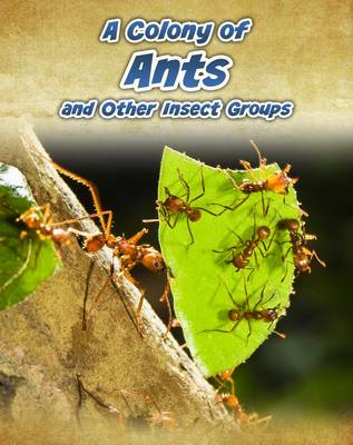 A Colony of Ants And Other Insect Groups by Anna Claybourne