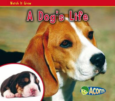 A Dog's Life by Nancy Dickmann