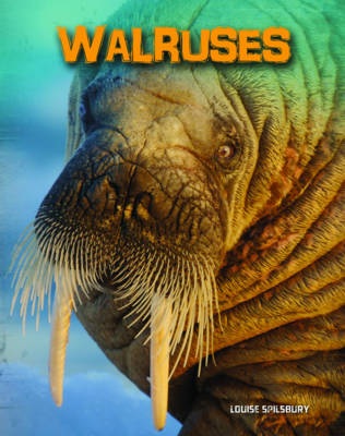 Walruses by Louise Spilsbury
