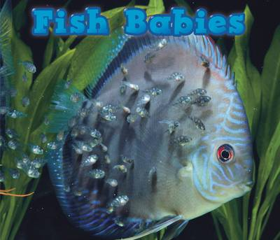 Fish Babies by Catherine Veitch