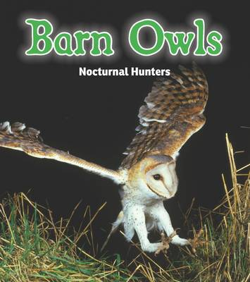 Barn Owls Nocturnal Hunters by Rebecca Rissman