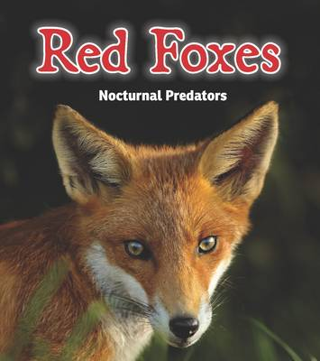 Red Foxes Nocturnal Predators by Rebecca Rissman