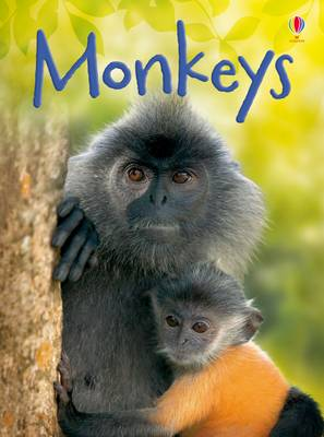 Monkeys by Lucy Bowman