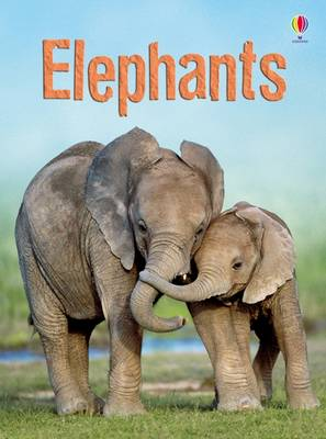 Elephants by James MacLaine