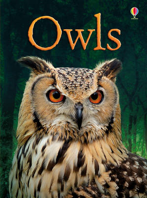 Owls by Emily Bone