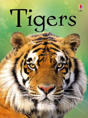 Beginners: Tigers by James MacLaine