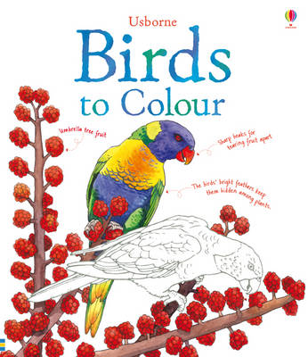 Birds to Colour by Megan Cullis