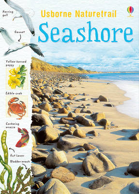 Seashore by Sarah Courtauld