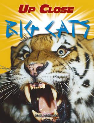 Big Cats by Paul Harrison
