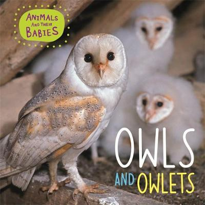 Owls & Owlets by Annabelle Lynch