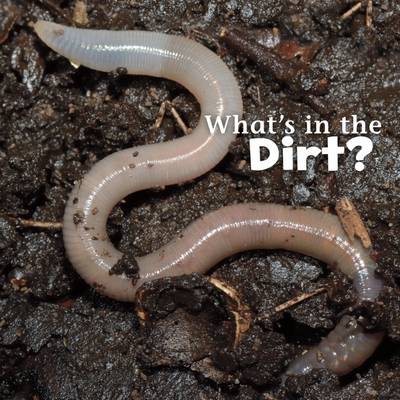 What's in the Soil? by Martha E. H. Rustad