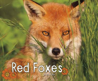 Red Foxes by