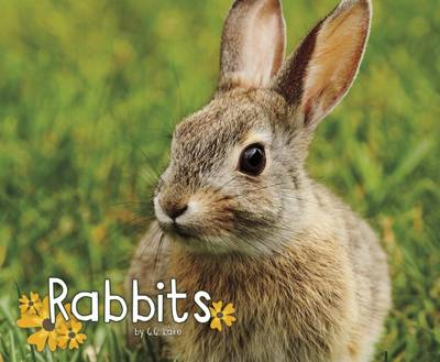 Rabbits by