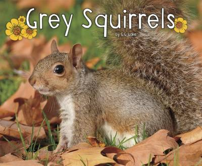 Grey Squirrels by G. G. Lake