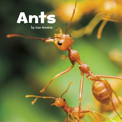 Ants by Lisa J. Amstutz