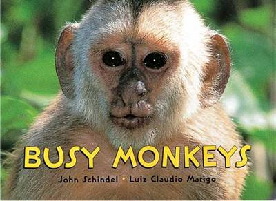 Busy Monkeys by John Schindel, Luiz Claudio