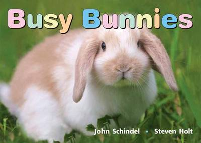 Busy Bunnies by John Schindel, Steven Holt