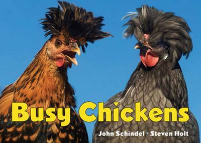 Busy Chickens by John Schindel, Steven Holt
