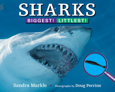Sharks Biggest! Littlest! by Sandra Markle, Doug Perrine