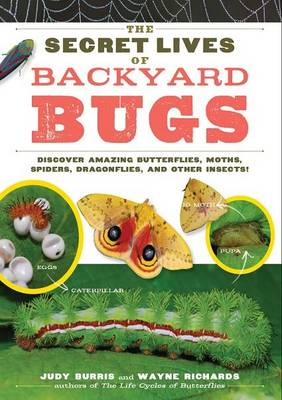 The Secret Lives of Backyard Bugs Discover Amazing Butterflies, Moths, Spiders, Dragonflies, and Other Insects! by Judy Burris, Wayne Richards